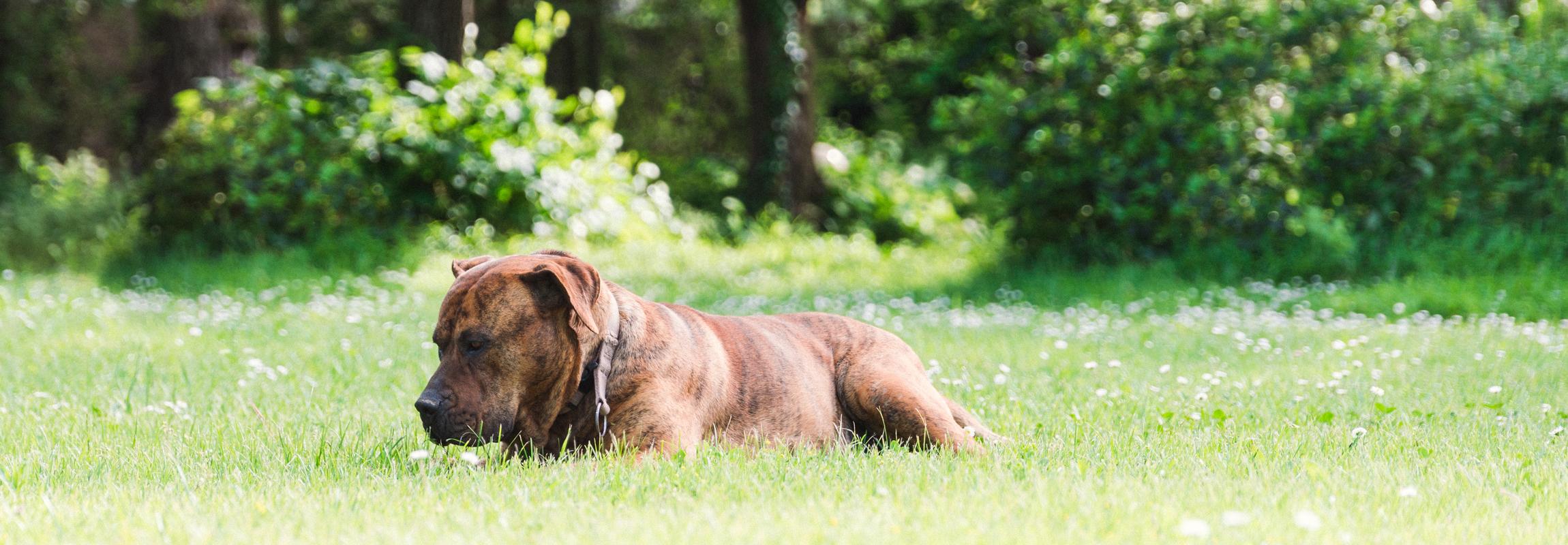 Ein Hund liegt im Park. Sollten Sie ihren Vierbeiner auf Ihre Reise durch die Provence, Südfrankreich mitnehmen wollen, können Sie gerne im Hotel Château de Montcaud unterkommen.