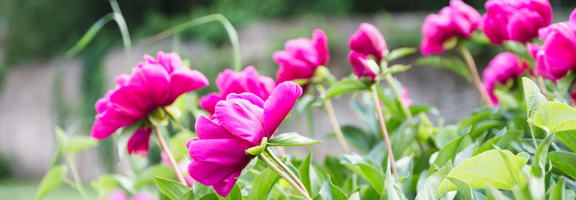 Fleur dans le jardin olfactif