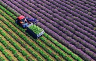 Récolte de lavande dans la Provence sur le titre du magazine culturel suisse « DU »