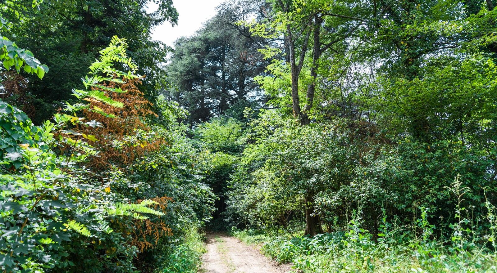 Ein Spazierweg im Park des Château de Montcaud, Hotel Provence Südfrankreich