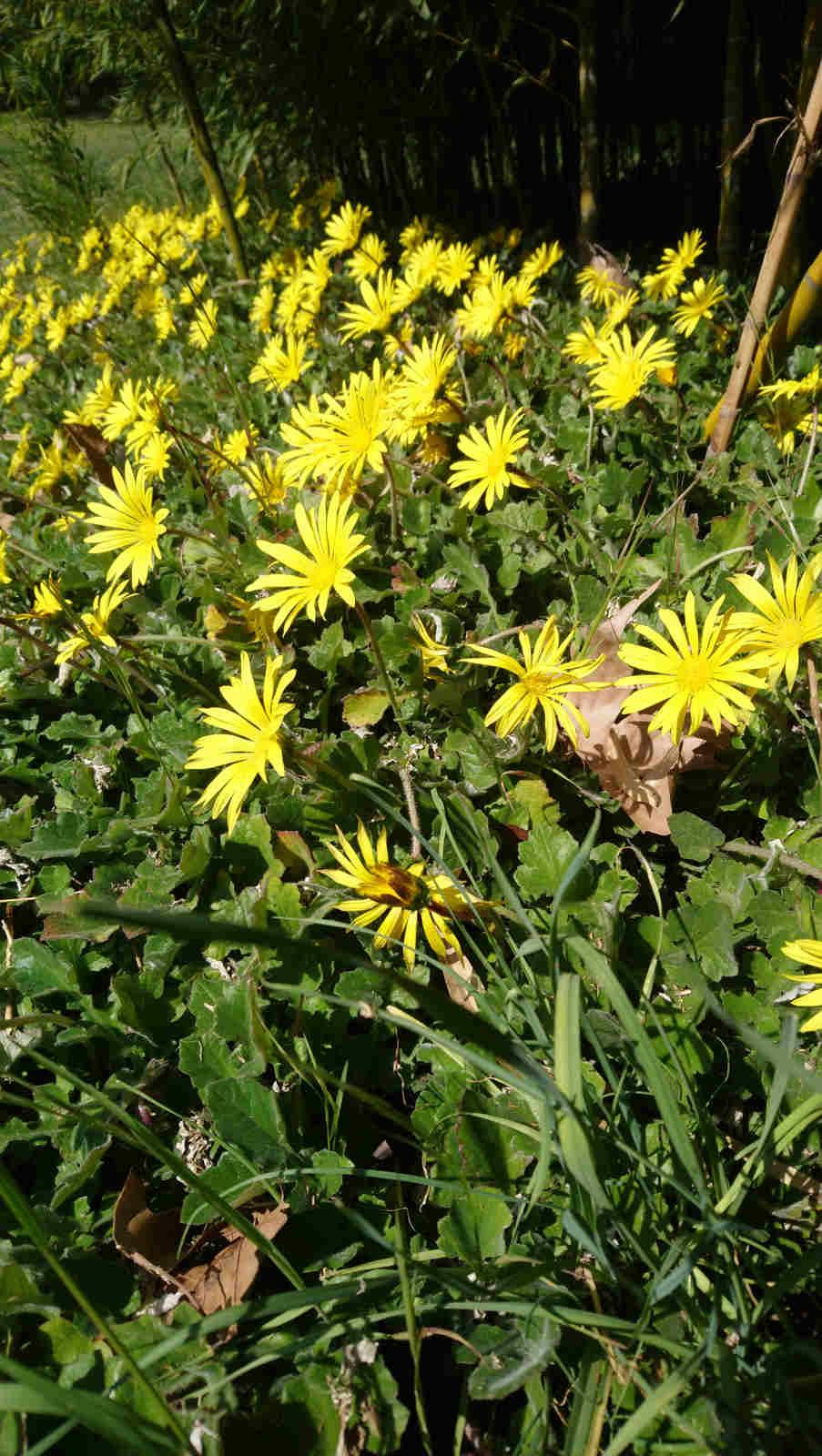 Blumen im Park des Château de Montcaud, Hotel Provence, Südfrankreich