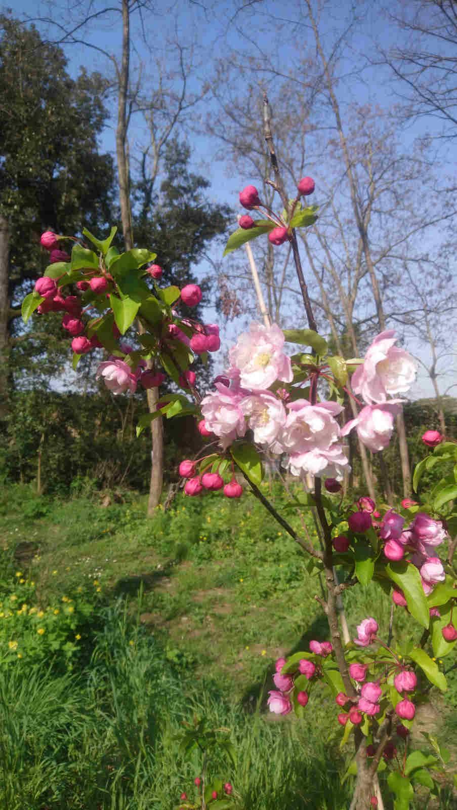 Blumen im Park des Château de Montcaud, Hotel Provence Südfrankreich